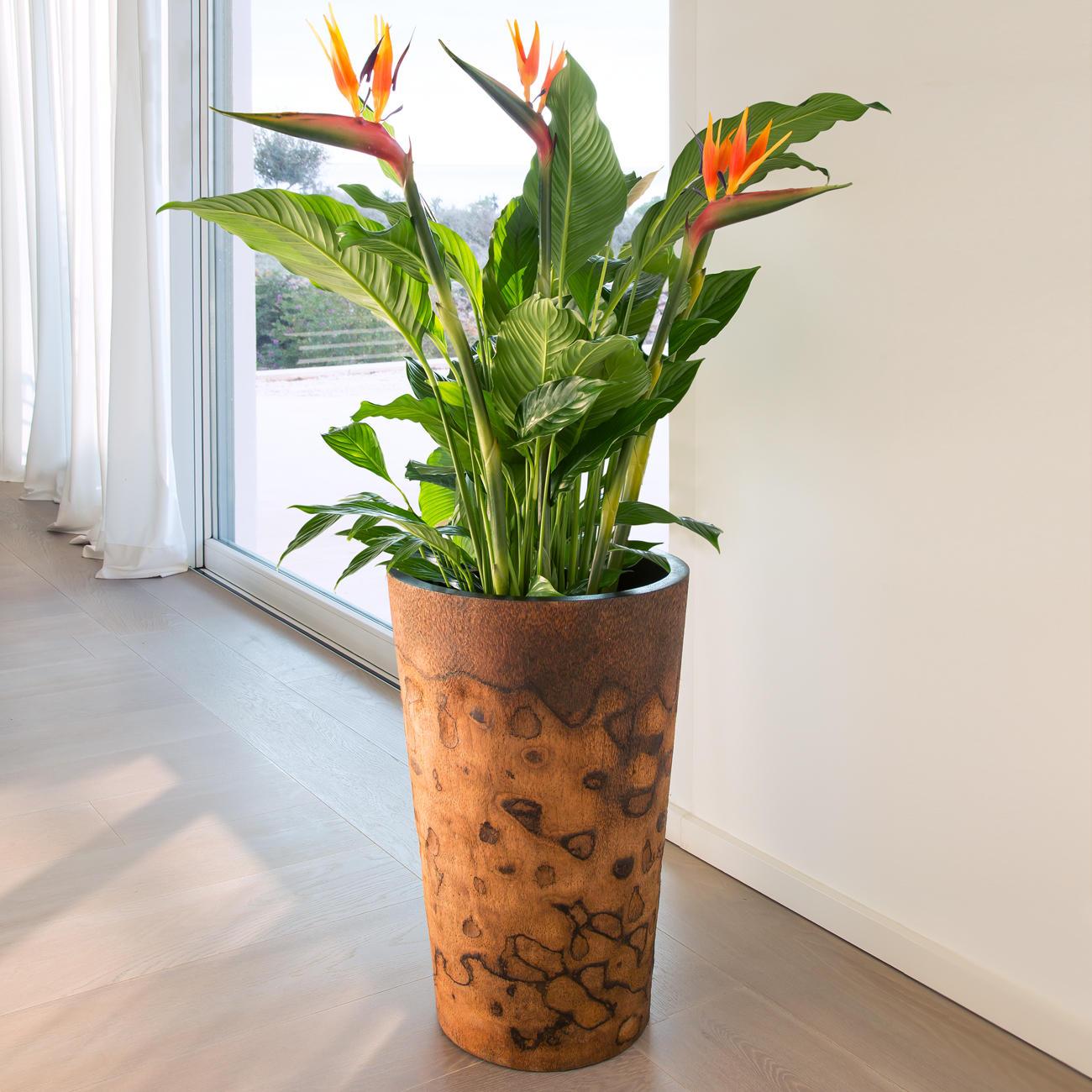 acheter pot de fleurs en bois de palmier en ligne pas cher. Black Bedroom Furniture Sets. Home Design Ideas