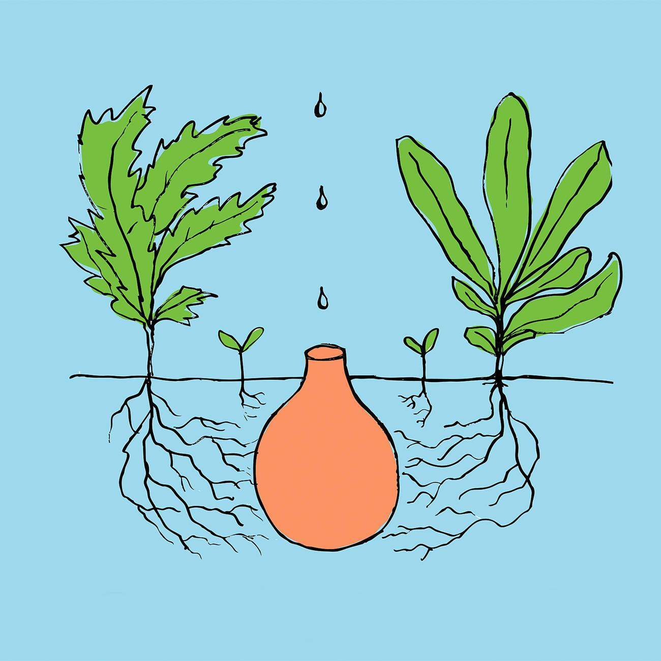 Acheter r cipient d irrigation oya en ligne pas cher for Plante 21 en ligne
