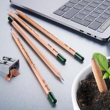 Crayons végétaux durables, lot de 5 pièces - Super crayons végétaux aux graines d'herbes et de fleurs. Durables, respectueux de l'environnement et beaux.
