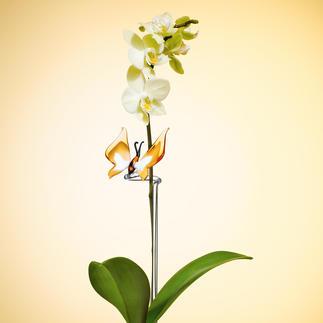 Tuteur colibri ou papillon pour orchidées Donne un précieux soutien. Durablement beau, facile à entretenir.