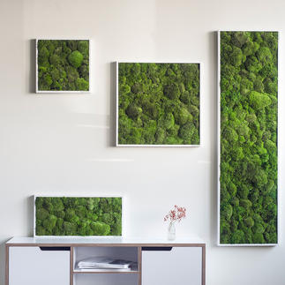 Tableau « boules de mousse » De la véritable mousse pour décorer vos murs. 100 % naturel - 0 % d'entretien.
