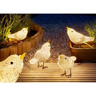 Oiseaux LED Une superbe décoration, tout au long de l'année, pour l'intérieur et l'extérieur.