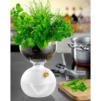 Verre à plantes design Un verre à plantes au design primé, qui prend soin de vos herbes aromatiques & autres plantations.