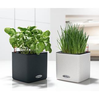 Pot à aromates auto-irrigant Prolongez la durée de vie de vos herbes aromatiques.