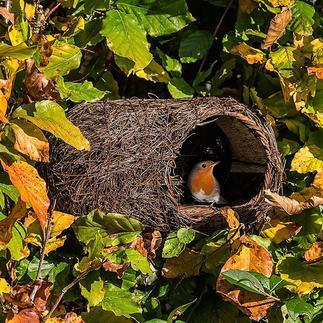 Nid Simon King Un petit nid douillet pour les rouge-gorge et autres petits oiseaux.
