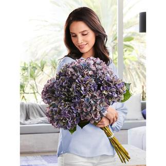 Bouquet d'hortensias Des fleurs à la beauté éternelle, assemblées par douzaine, comme tout juste nouées en bouquet par un talentueux fleuriste.