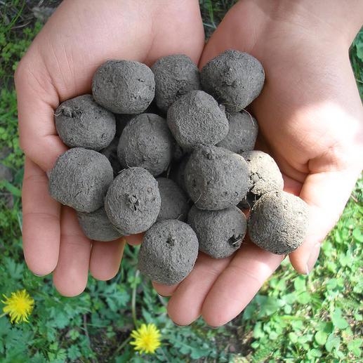 Lot bombes de semences Jusqu'à 25 végétaux, fleurs ou herbes germent à partir d'une seule boule …