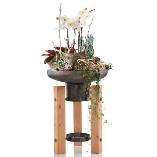 Particulièrement esthétique pour les plantations surélevées en terrasse, sur un balcon ou dans une entrée.