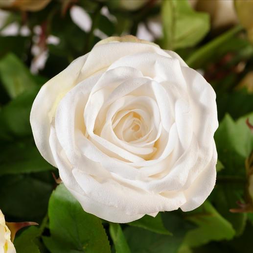 Bouquet de roses Avalanche