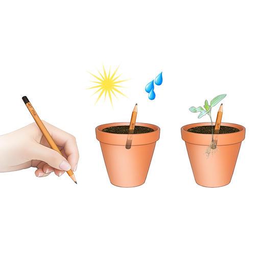 Écrire, planter, un peu de soleil et d'eau, et en quelques jours, les premières pousses font leur apparition.