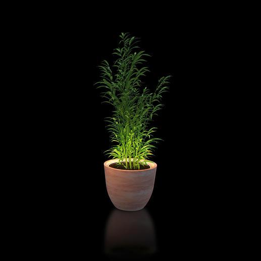 Anneau lumineux pour plantes Avec cet anneau lumineux à LED, mettez en scène vos plantes de façon théâtrale.