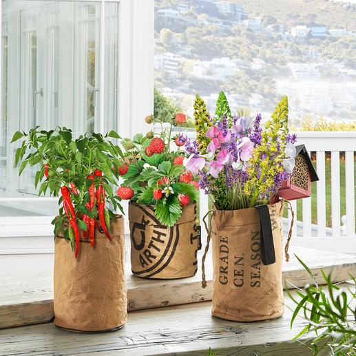 Kits de plantation mini-jardin Transformez votre balcon, bord de fenêtre ou patio en jardin d'été luxuriant avec ces sacs de plantes.
