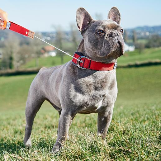 Collier pour chien 2-en-1 avec laisse intégrée La nouvelle génération de laisse pour chien est maintenant portée par votre chien. Développée en Allemagne.